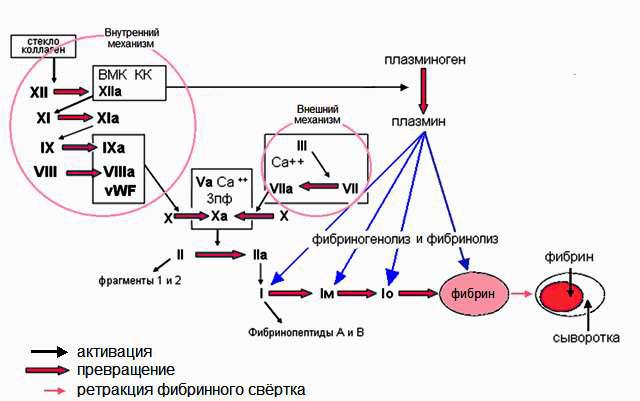 Упрощённая схема свёртывания и