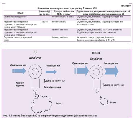 Рис. 4. Влияние РАС на внутрипочечную гемодинамику