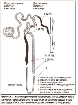 Место действия основных групп диуретиков