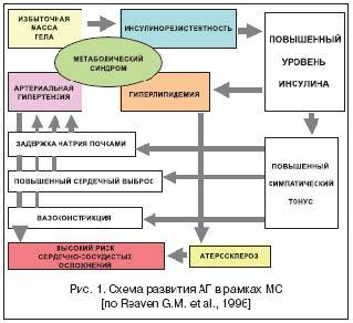 Схема развития АГ в рамках МС