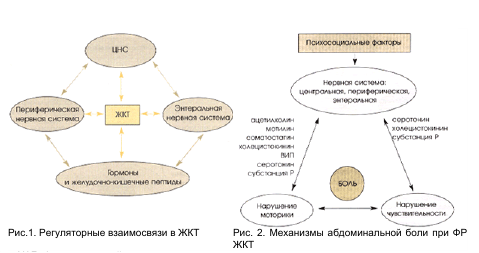 Регуляторные взаимосвязи в ЖКТ