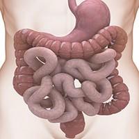 Дисбактериоз и пробиотики