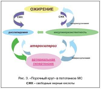 """""""Порочный круг"""" в патогенезе МС"""