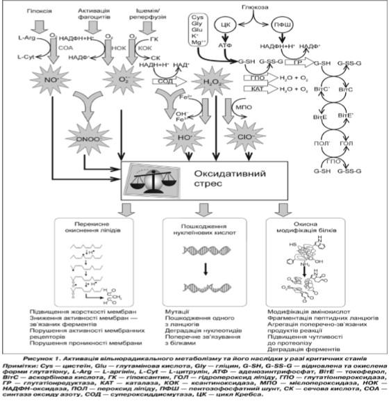 Антиоксидантна терапія в медицині критичних станів