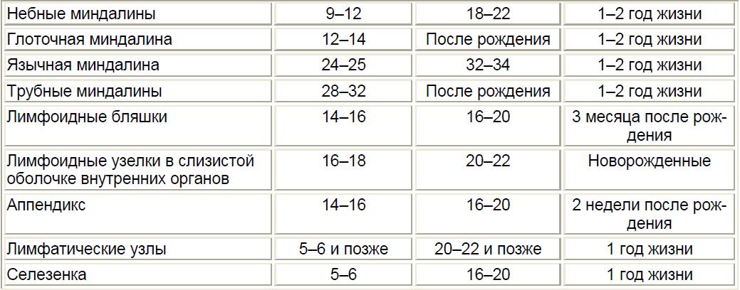 Этапы развития центральных и периферических органов иммунной системыдетского организма
