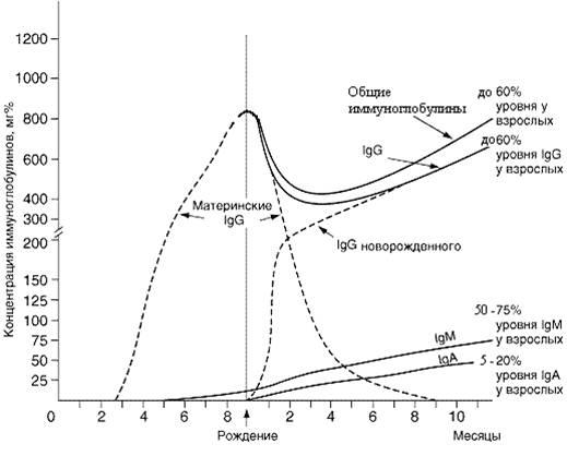 Динамика материнских и собственных иммуноглобулинов сыворотки крови