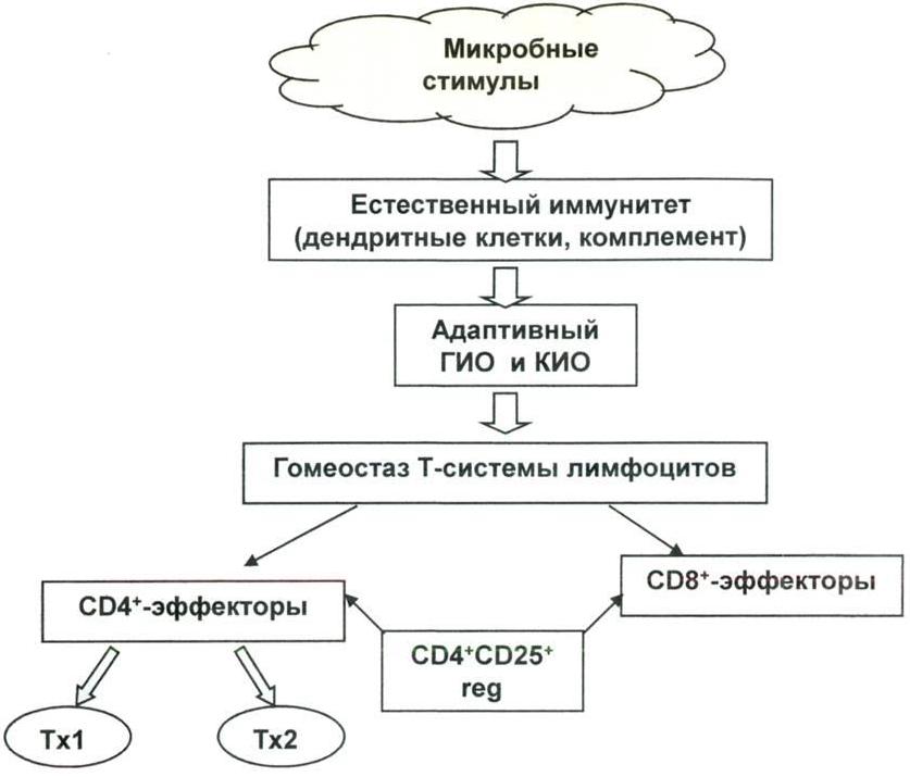 Формирование механизмов естественного и адаптивного иммунитета у детей в контексте гигиенической гипотезы
