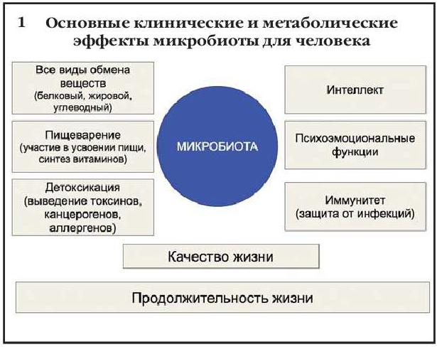 Основные клинические и метаболические эффекты микробиоты для человека