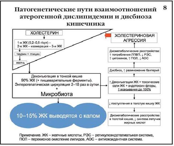 Патогенетические пути взаимоотношений атерогенной дислипидемии и дисбиоза кишечника