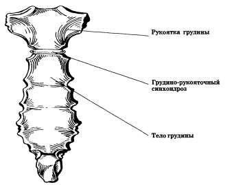 Грудино-рукояточный сустав