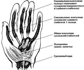 Сухожилия сгибателей кисти и их синовиальные влагалища