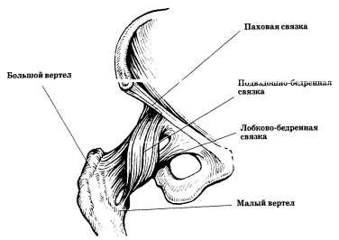 Тазобедренный сустав (вид спереди): связочный аппарат