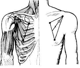 Топография малой грудной мышцы. Определение точки инъекции