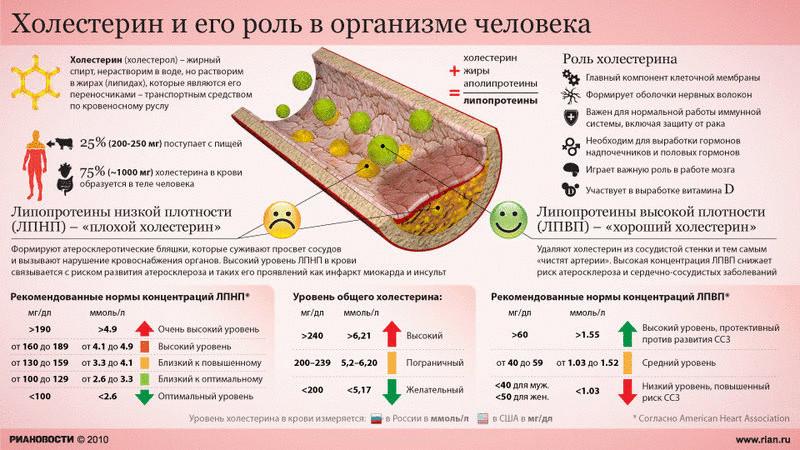 Холестерин и его роль в организме человека