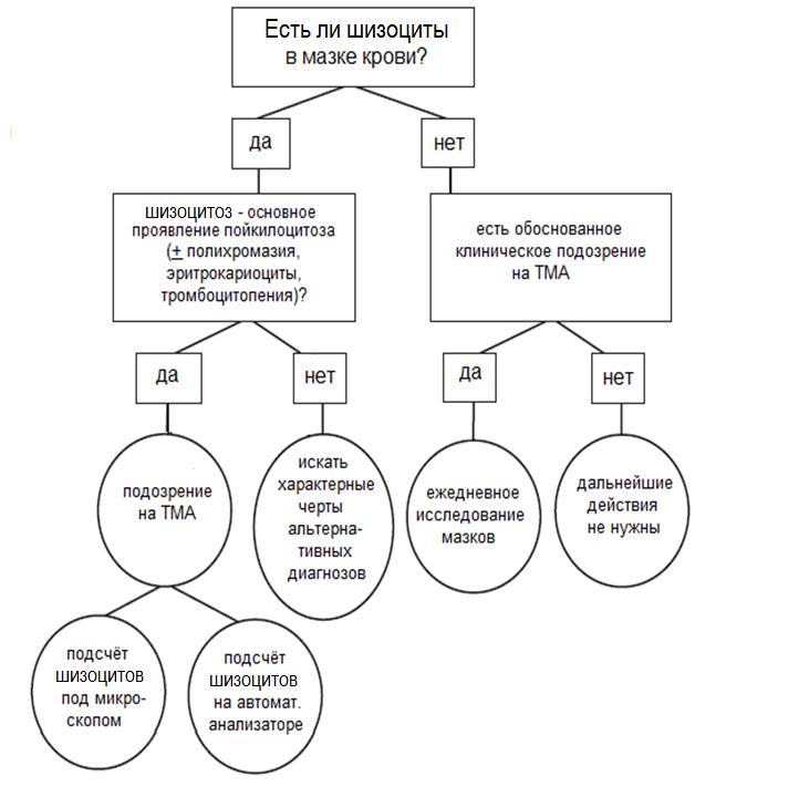 Ретикулоцитоз