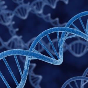 Описаны три мутации в кодоне 717 гена АРР, которые вызывают болезнь Альцгеймера.