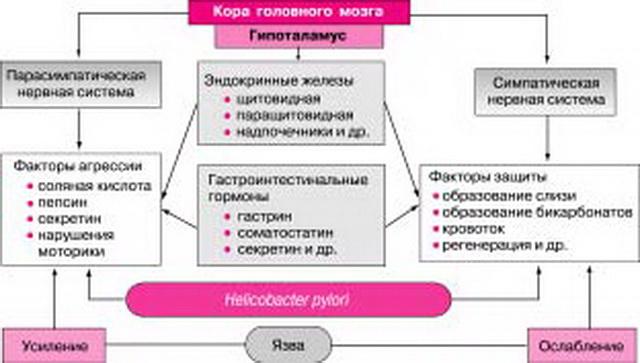 Основные патогенетические звенья язвообразования