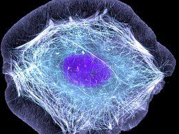 Уникальное исследование устойчивости клеток к воздействию низких температур.